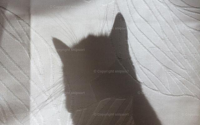 Katze am Fenster | Schatten einer Katze hinter dem Vorhang am Fenster.