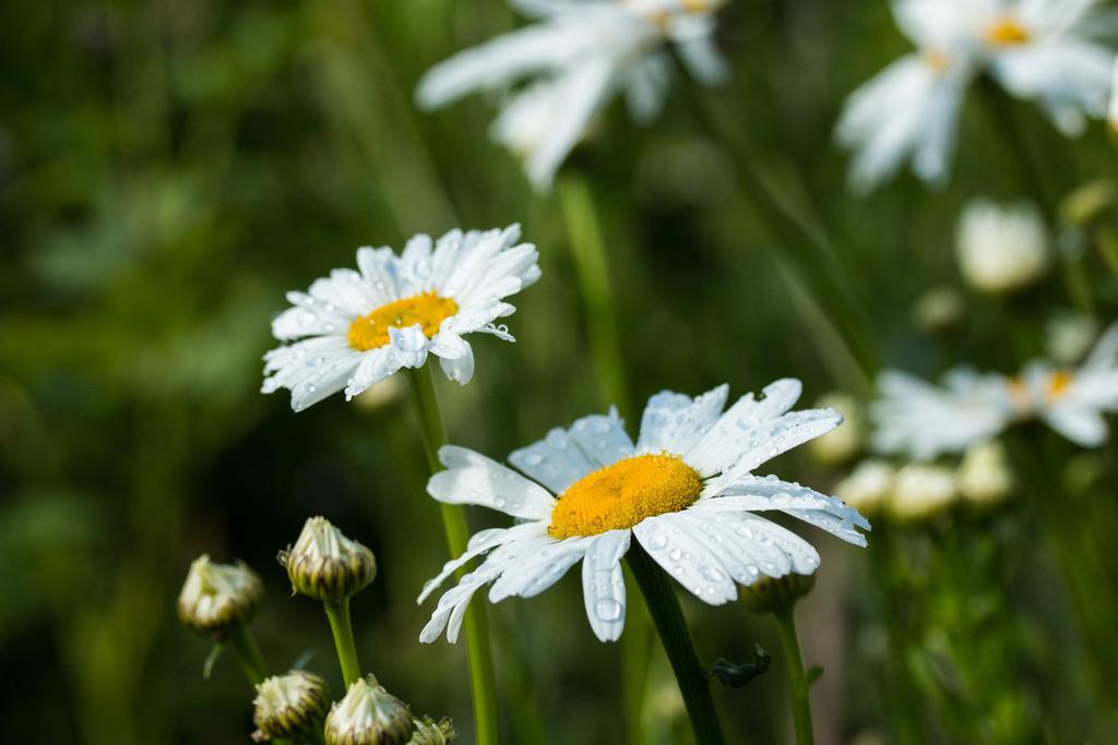 Weg zum Glück | Die Blume ist das Lächeln der Pflanze. Peter Hille