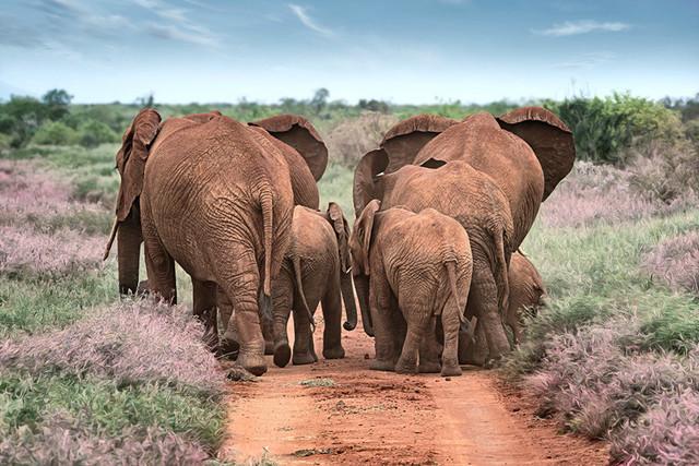 WE ARE FAMILY | Kenia