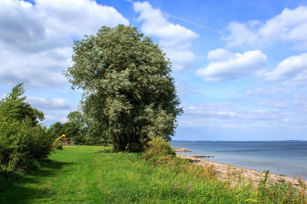 Strand in Norgaardholz | Baum am Strand in Norgaardholz
