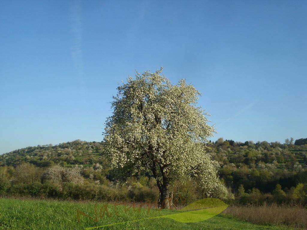 Zeit zu Blühen | Funkionierst Du noch oder blühst Du schon? Wundervoller blühender Baum als Erinnerung, was zählt.