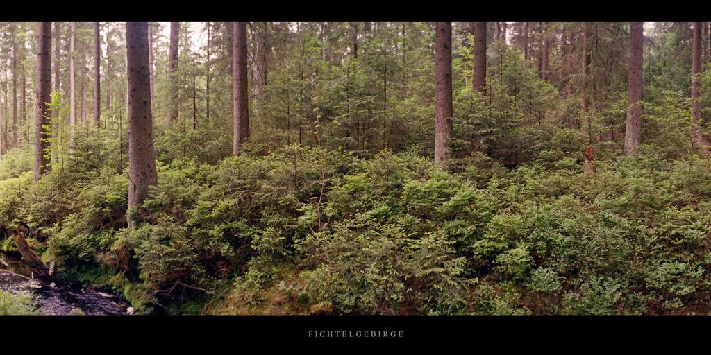Fichtelgebirge | Nadelwald mit Bachlauf im Fichtelgebirge