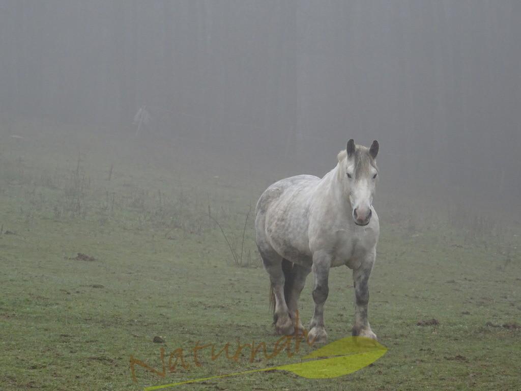 Nebelpferd II