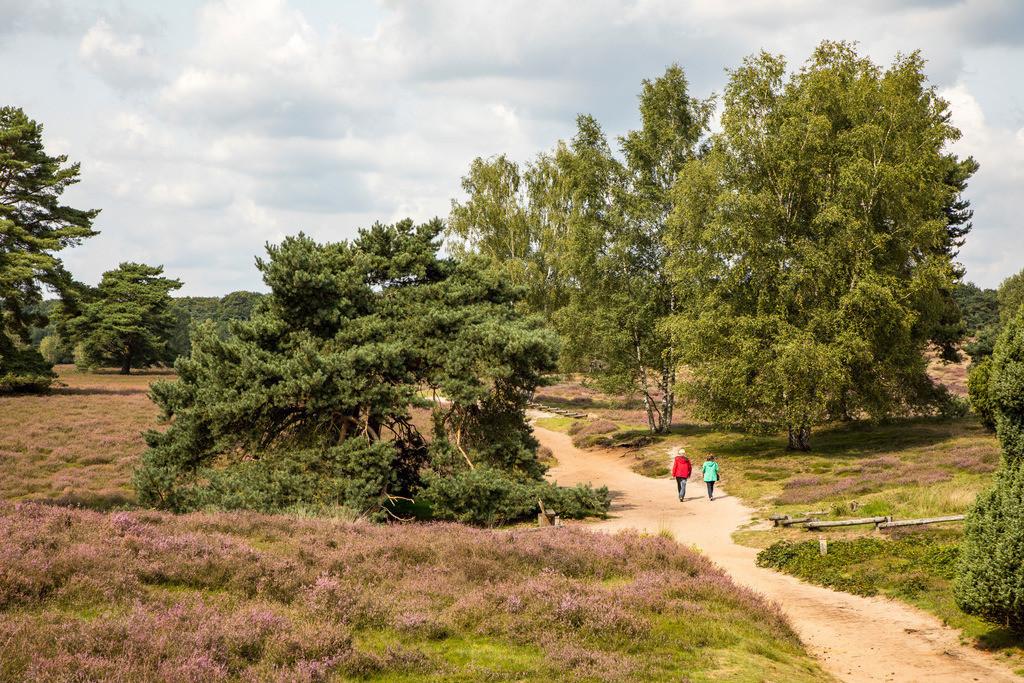 JT-171112-109 | Die Westruper Heide, im Naturpark Hohe Mark Westmünsterland, bei Haltern, Heideblüte,