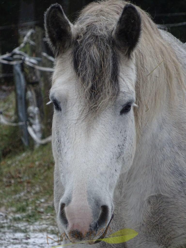 Pferdeliebe I