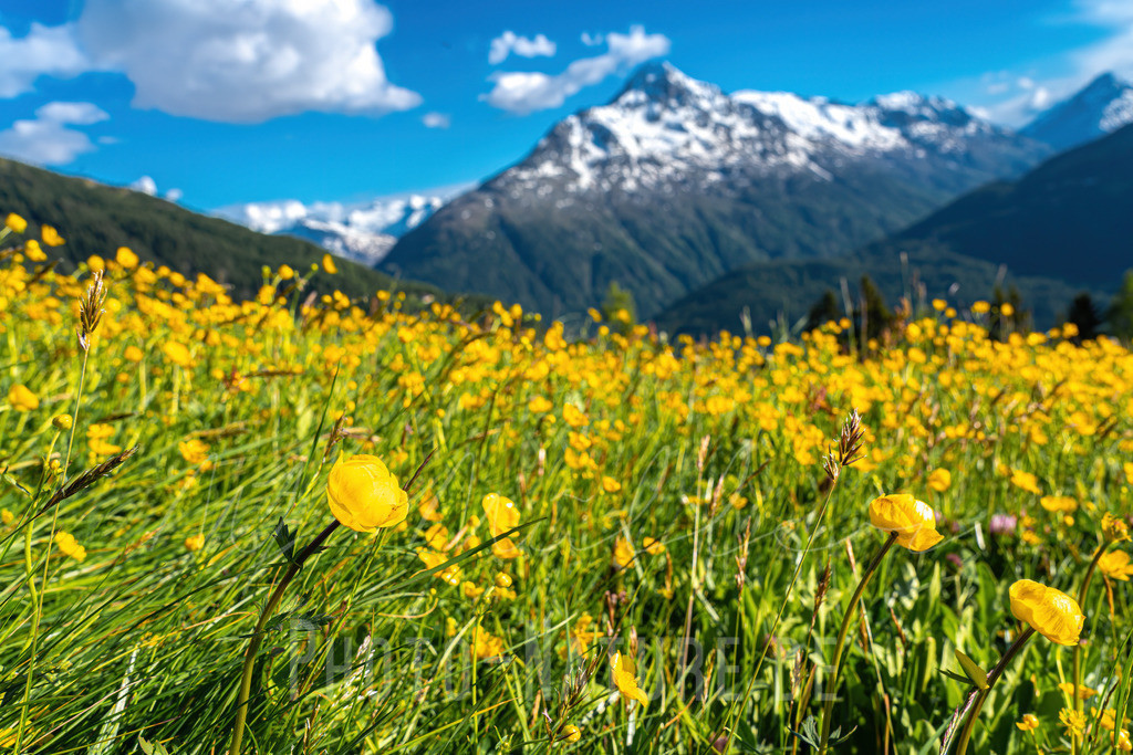 Ötztaler Blumenmeer | Welch ein herrlicher Sommertag in den Ötztaler Alpen inmitten einer Blumenwiese