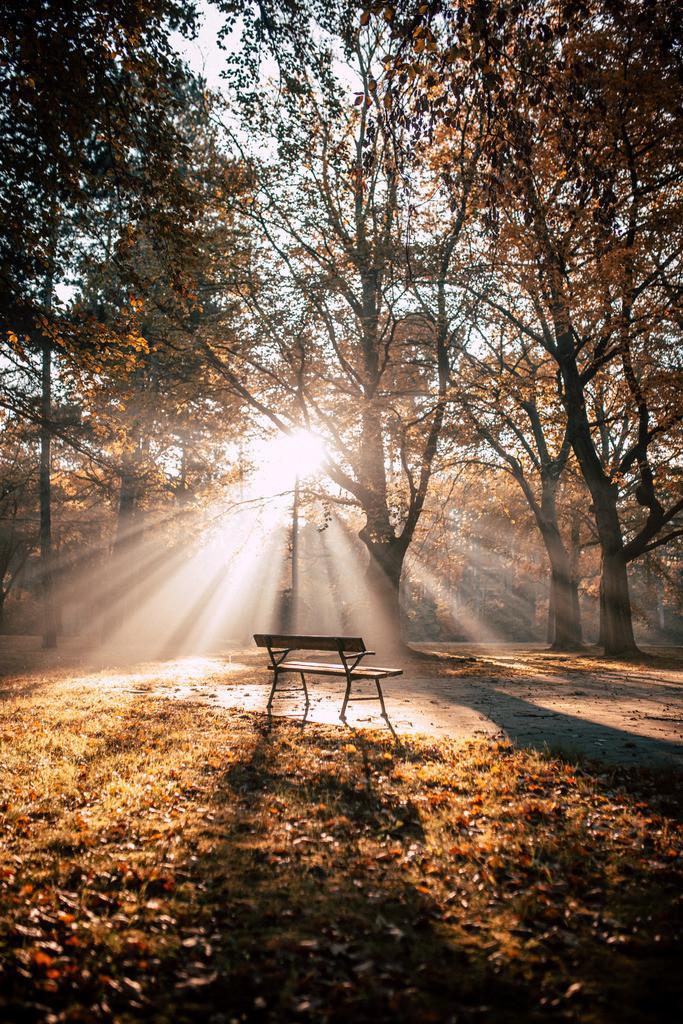 Stille im Park