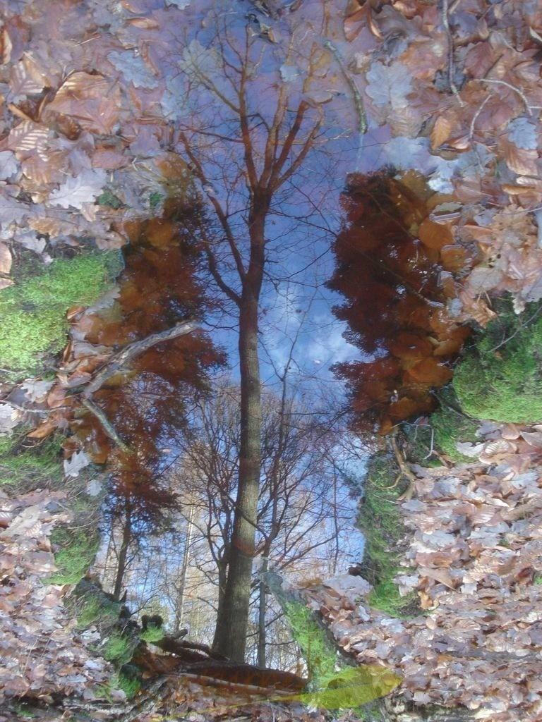 Seelenruhig | Wenn das Wasser seelenruhig ist, spiegelt sich die Umgebung. Wie über eine Treppe lädt Dich der Baum ein, sich zu ihm zu gesellen... so dass Deine Seele aufatmen kann!