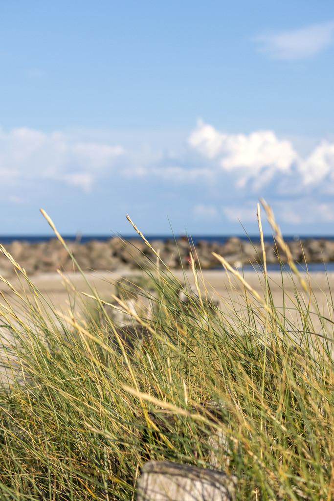 Strandhafer an der Ostsee   Sandstrand im Sommer