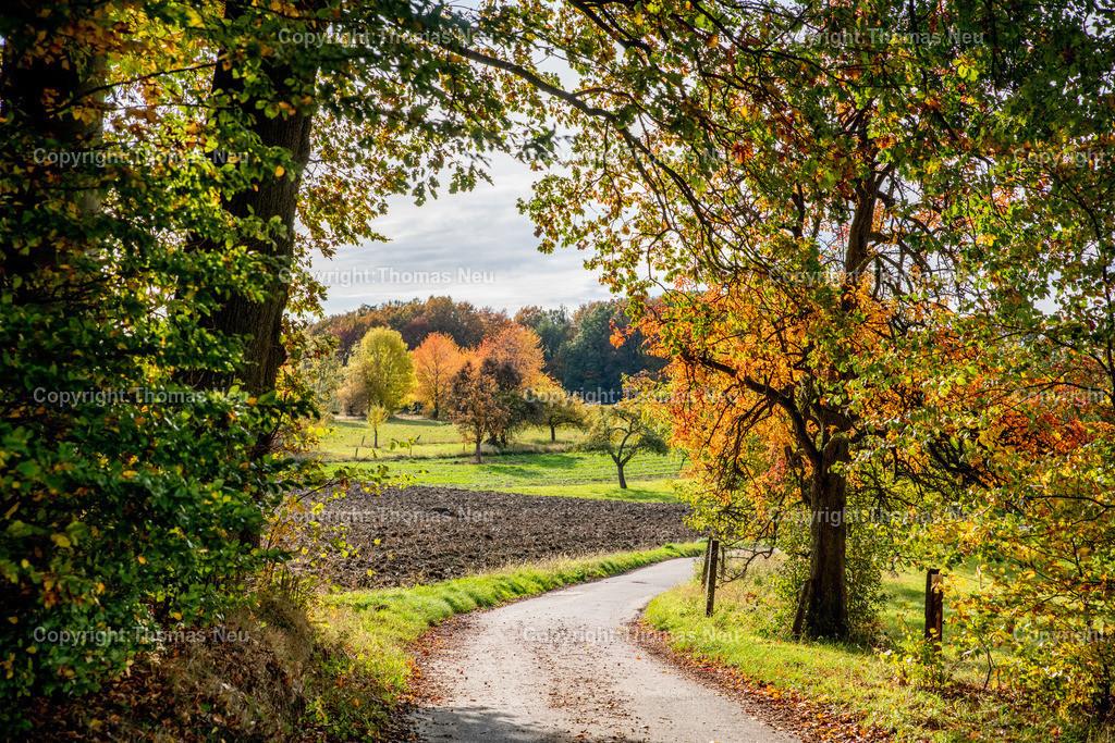DSC_9416   bli,Lautertal, Herbst, goldener Oktober zum Schlussakkord, hatte der Oktober uns Wettermäßig nicht gerade verwöhnt war der vergangenen sonnige Sonntag für viele Bergsträßer eine willkommene Gelegenheit in Corona Abstand und Maksenzeiten die Natur zu genießen,  wie hier zwischen Kolmbach und Raidelbach,  ,, Bild: Thomas Neu