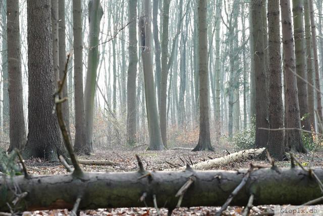 Raderbroicher Wald im Winter | Bäume im Raderbroicher Wald zur Winterzeit