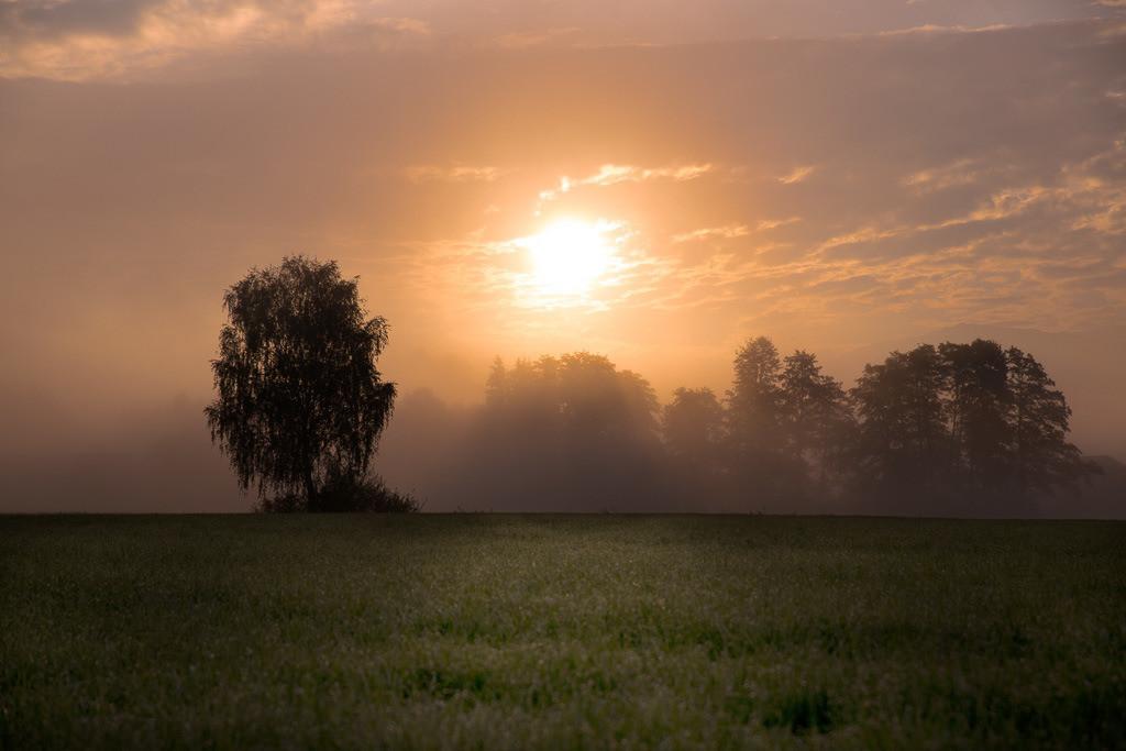 Morgenrot im Herbst | Im Morgennebel gegen die Sonne in der Nähe des Inntaldreiecks.
