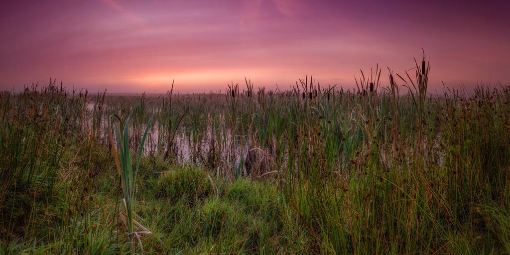 Morgenrot in den Hammewiesen | Frühmorgens an einer Blänke in den Hammewiesen
