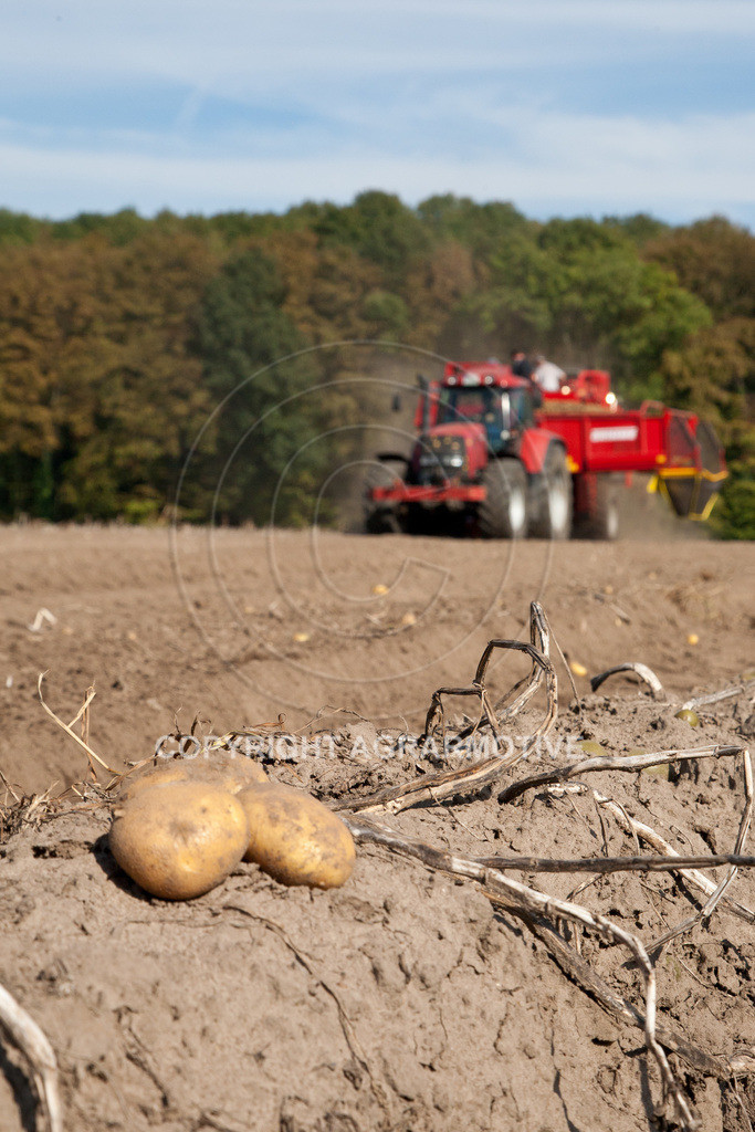 20110929-IMG_5859 | Ernte auf einem Kartoffelfeld - AGRARBILDER