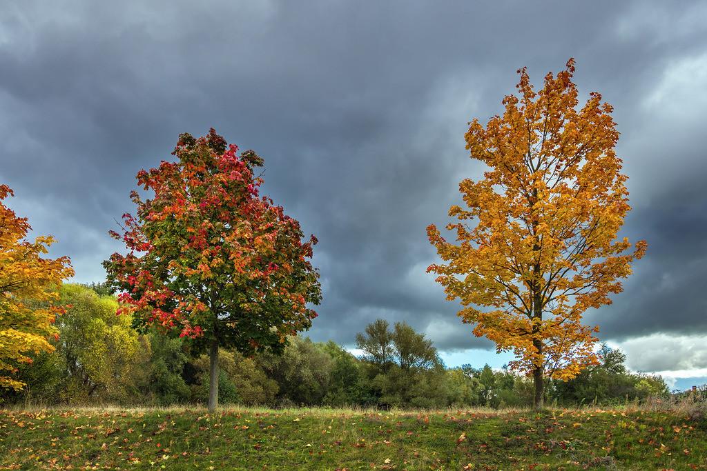 Blick auf herbstlich gefärbte Bäume in der Hansestadt Rostock   Blick auf herbstlich gefärbte Bäume in der Hansestadt Rostock.