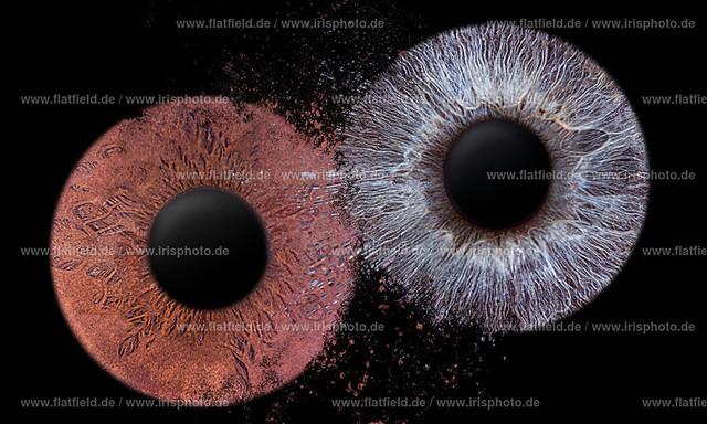 Iris-foto-Beispiel-535
