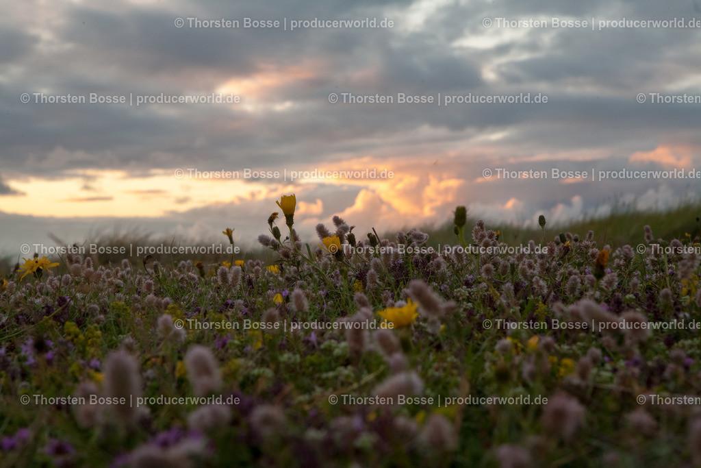 20110725-IMG_2575-HDR