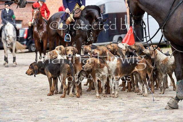 Jagd Knoop 217558_Marina Hewig