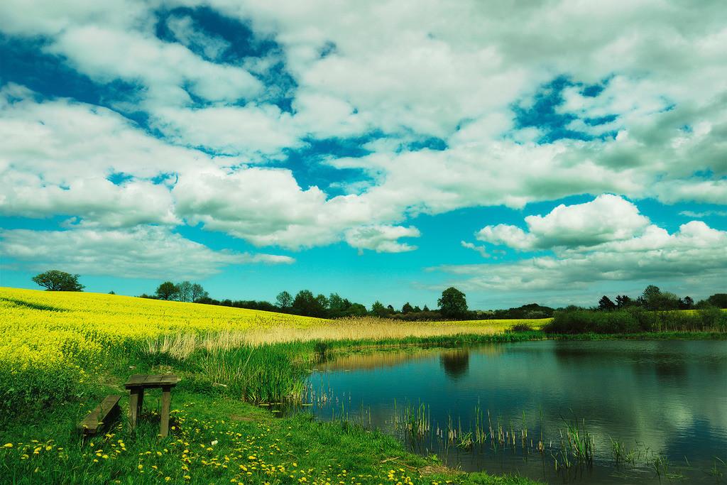 See mit Rapsfeld | See mit Rapsfeld, Holsteinische Schweiz in Schleswig-Holstein,