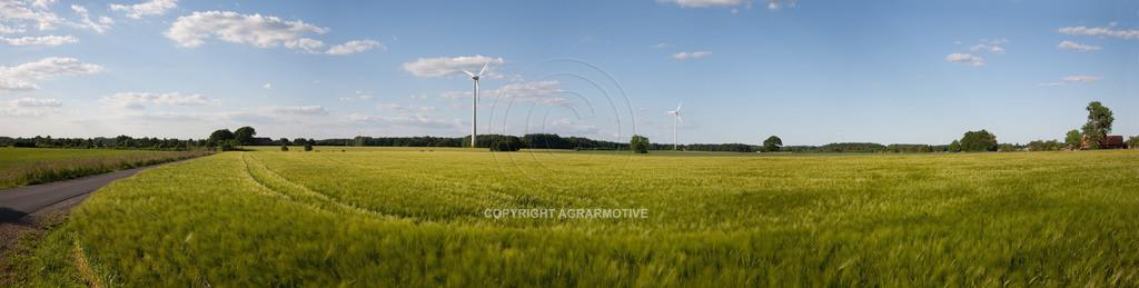20090529-IMG_2086_panorama | grünes Gerstenfeld vor der Abreife - AGRARFOTO