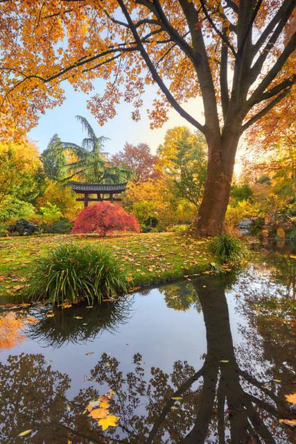 Bunter Herbst im Park | Der Japanischer Garten in Leverkusen ist eine weit über die Stadtgrenzen hinaus bekannte Attraktion. An schönen Wochenenden ist es nicht gerade eine Ruheoase, aber auch dann immer noch idyllisch. Die verschiedenen Baumarten wie der Japanische Ahorn, die Zieraprikose, Magnolien und Kirschen verwandeln den Park im Herbst in einen Farbenrausch.