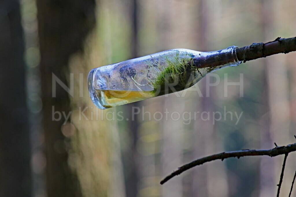 Flasche am Ast | Eine Flasche hängt am Ast in einem Wald bei Meinerzhagen.