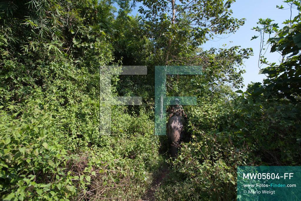 MW05604-FF | Laos | Provinz Sayaboury | Reportage: Arbeitselefanten in Laos | Mahut auf seinem Arbeitselefanten im Dschungel.  Lane Xang -