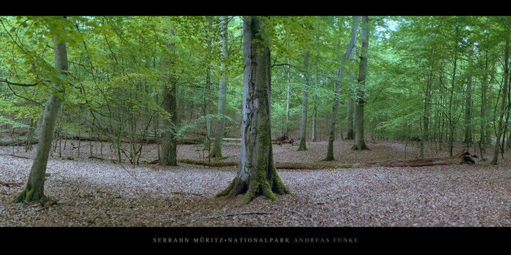 Poster Serrahn Müritz-Nationalpark | Poster oder Wandbild von Buchen im Buchenwald und Weltnaturerbe Serrahn im Müritz Nationalpark kaufen