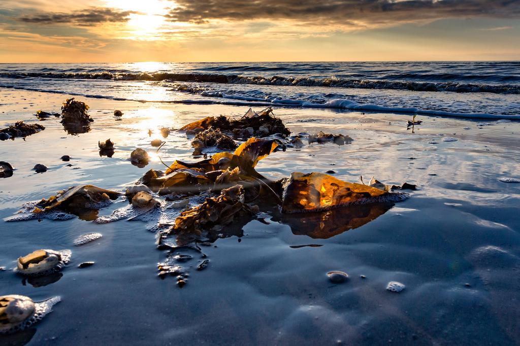 Algen im Gegenlicht   Weitblick am Strand in St. Peter-Ording