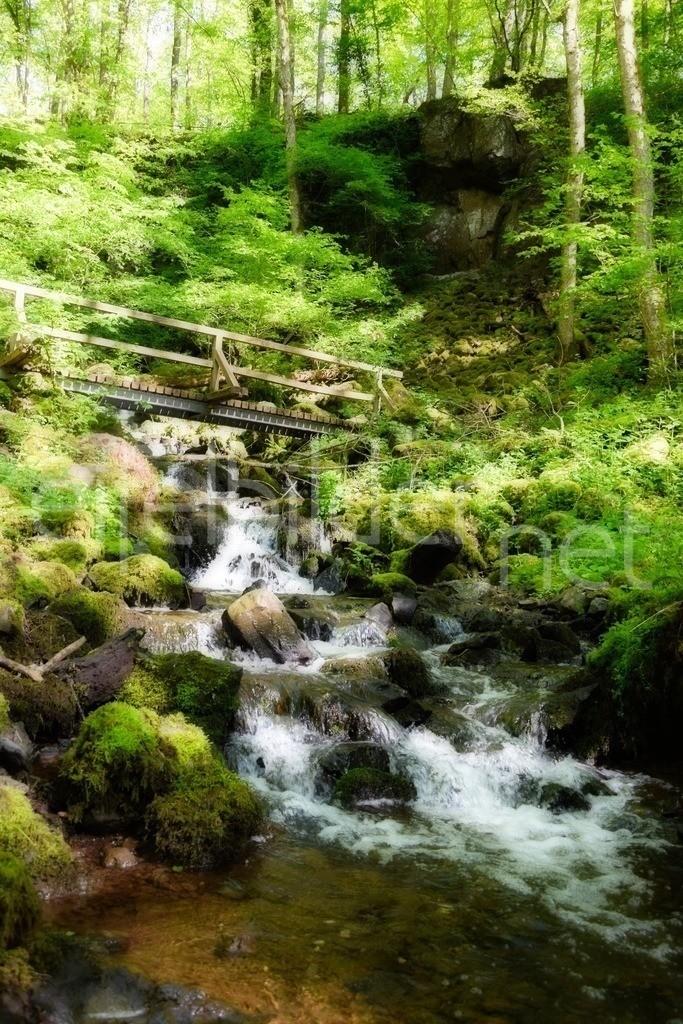 mystische Woflsschlucht    Frühling in der Wolfsschlucht bei Bettenfeld / Manderscheid (Kreis Bernkastel Wittlich / Wirtlicher Land)