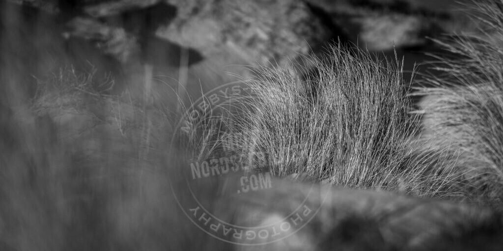 _MGB3135 | Verstecktes Dünengras