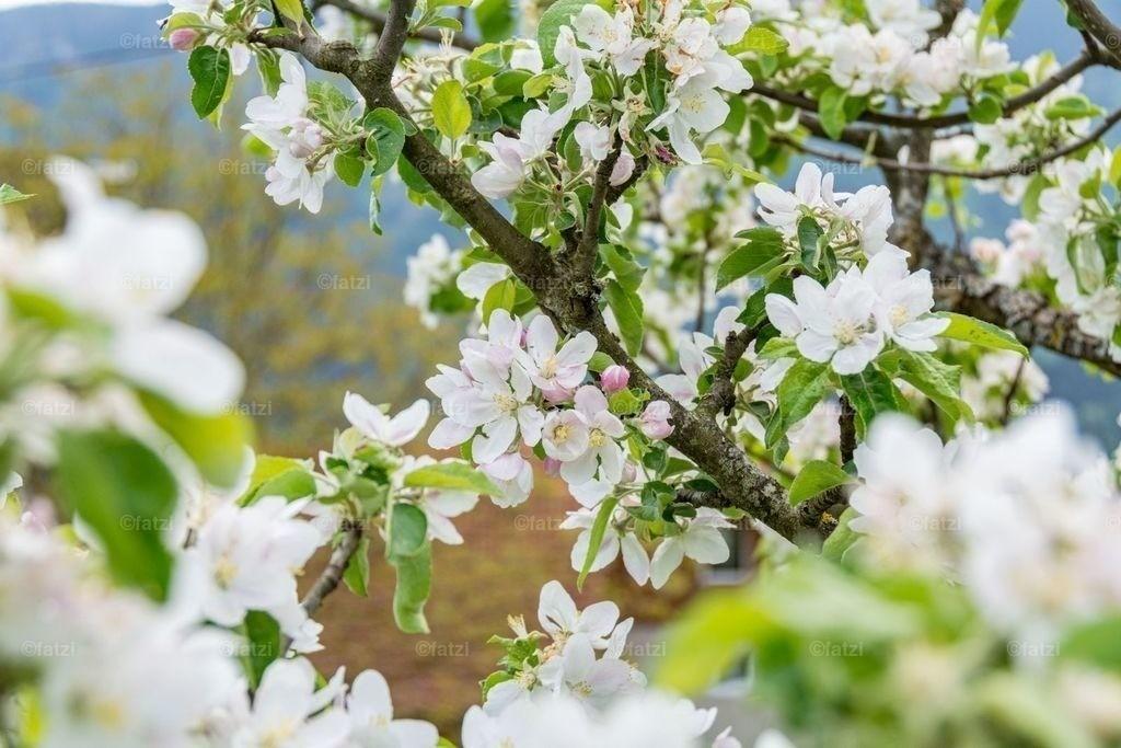 Blüten-Mai18__fatzi_043