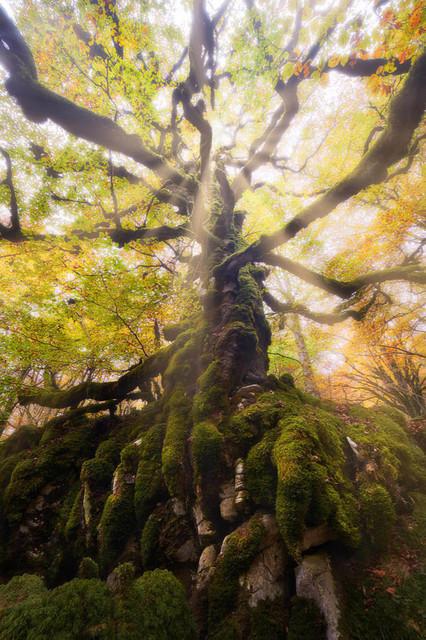 010_Landschaft_Baum_alt_Wald