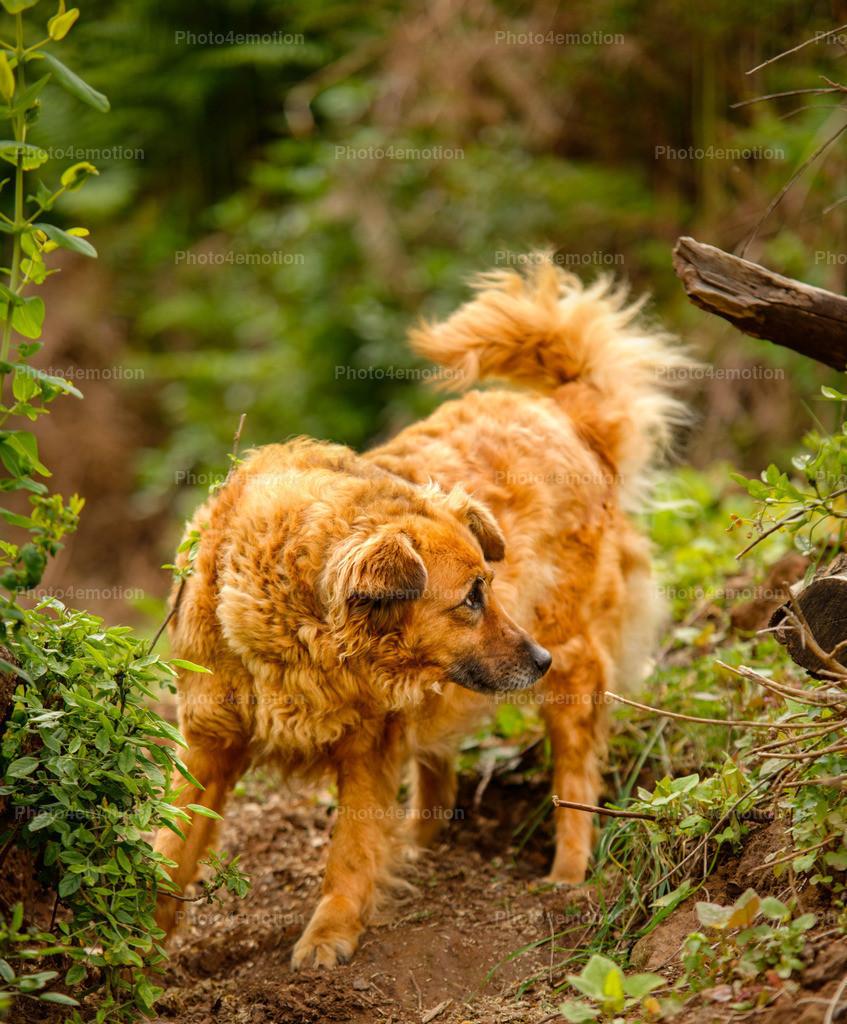 Strassenhunde-1-7