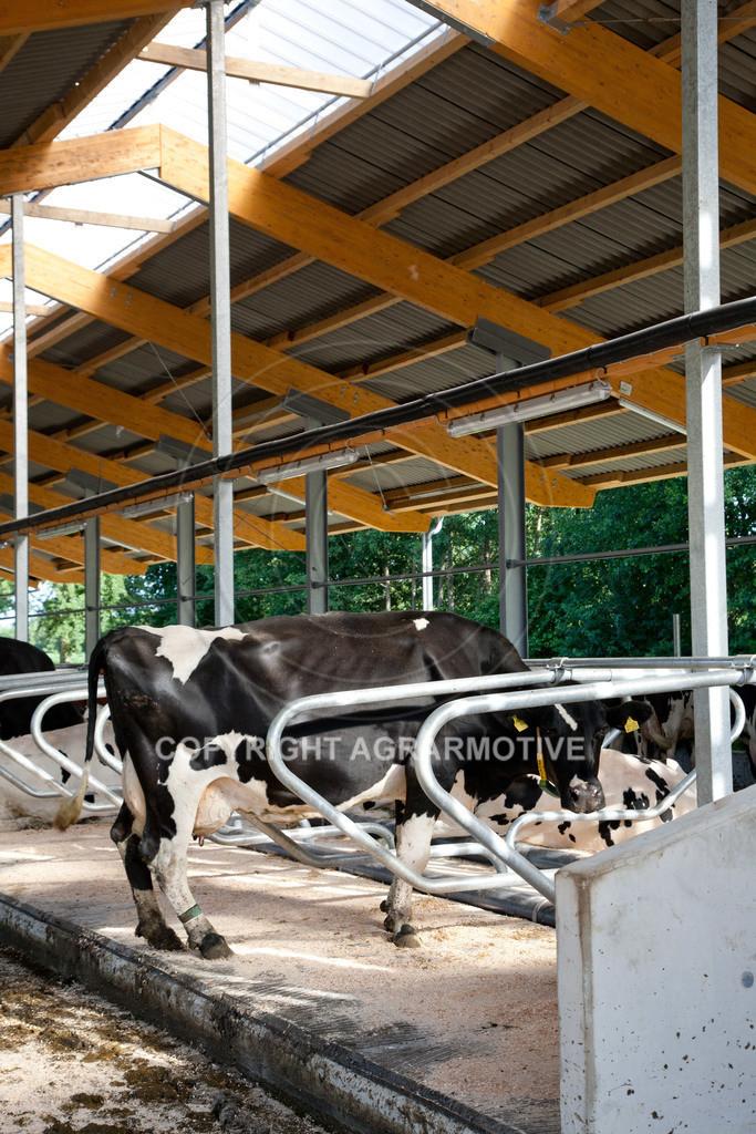 20110627-IMG_2986 | Milchkühe im Boxenlaufstall
