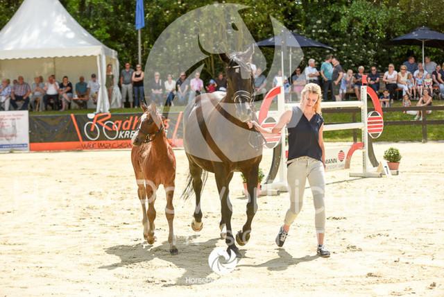 RFV Ochtrup - Fohlenparade-0811