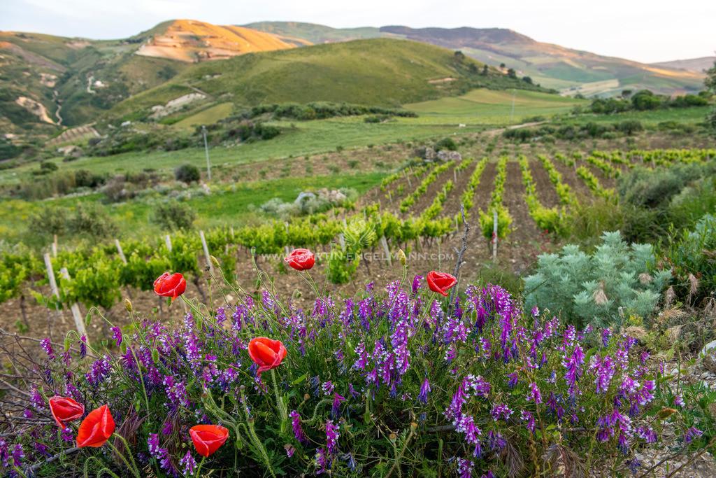 Spring in Sicily, Italy | Im Hochland von Sizilien