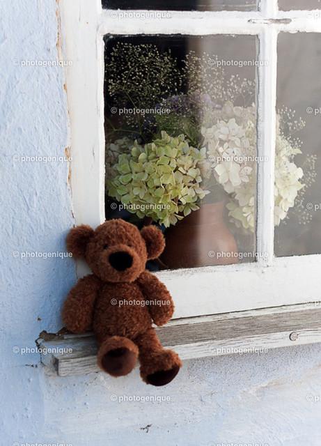 Teddy-Fenster-Blumen-web