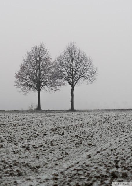 Zwei Bäume im Winter | Zwei Bäume auf einem Acker in Raderbroich