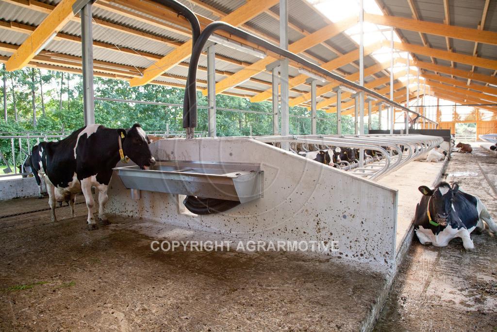 20110627-IMG_3058 | Milchkühe im Boxenlaufstall