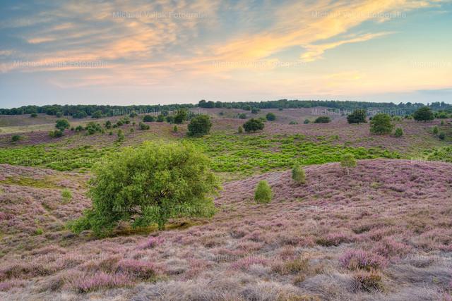 Sonnenuntergang in der Heide | Sonnenuntergang in der Heidelandschaft im Nationalpark Veluwezoom bei Arnheim im August.