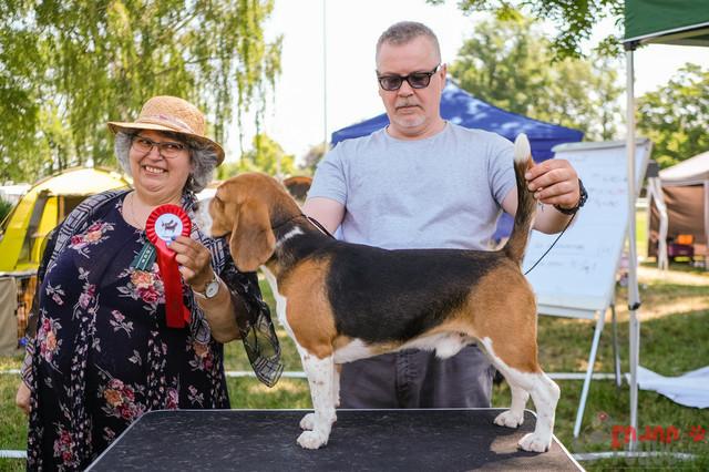 IHA Aarau   Beagle, Sonntag IHA Aarau 30.06.2019 Foto: Leo Wyden