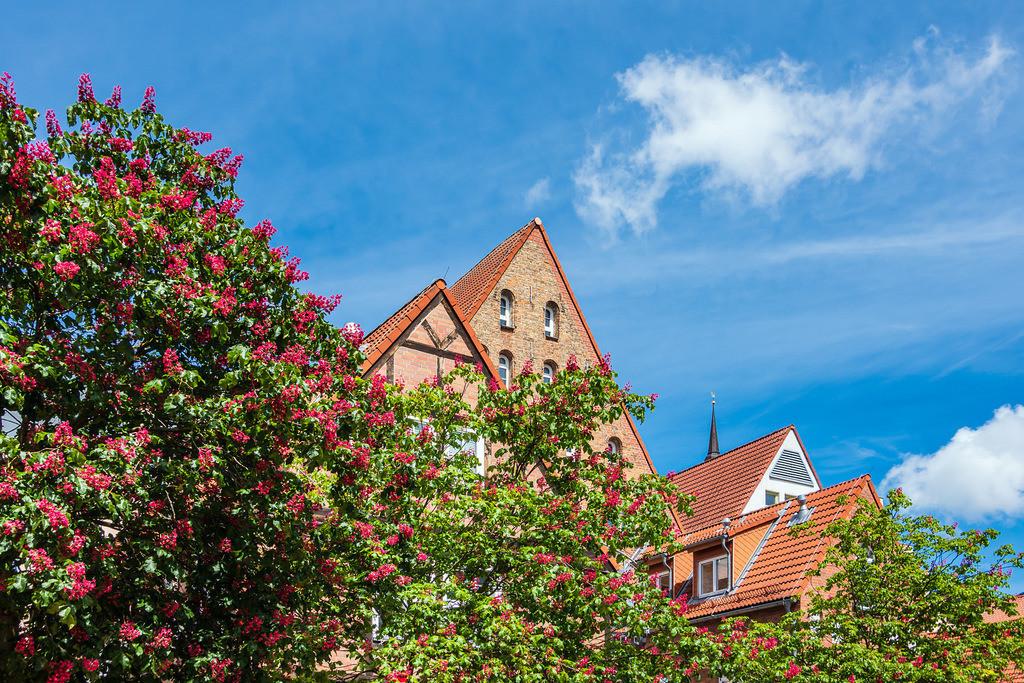 rk_06081   Historische Gebäude und blühende Bäume in der Hansestadt Rostock.
