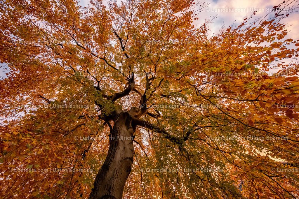 10049-11344 - Herbstfarben   max. Auflösung 8256 x 5504