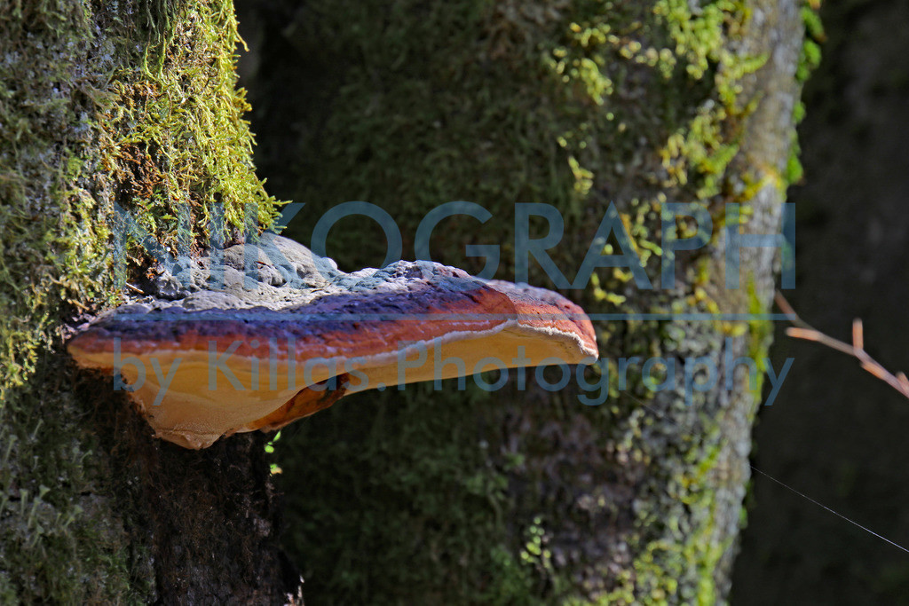 Pilz am Baumstamm | Ein interessanter Pilz wächst am Baumstamm.