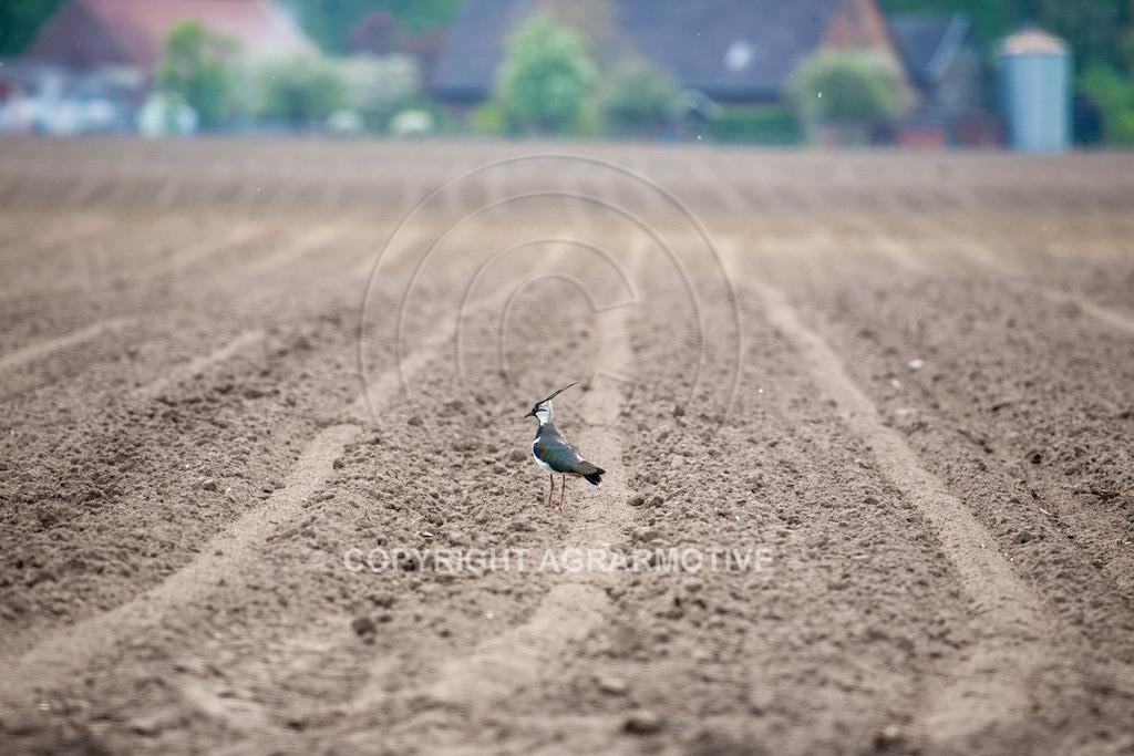 20100429-IMG_5941 | Wildtier Vogel