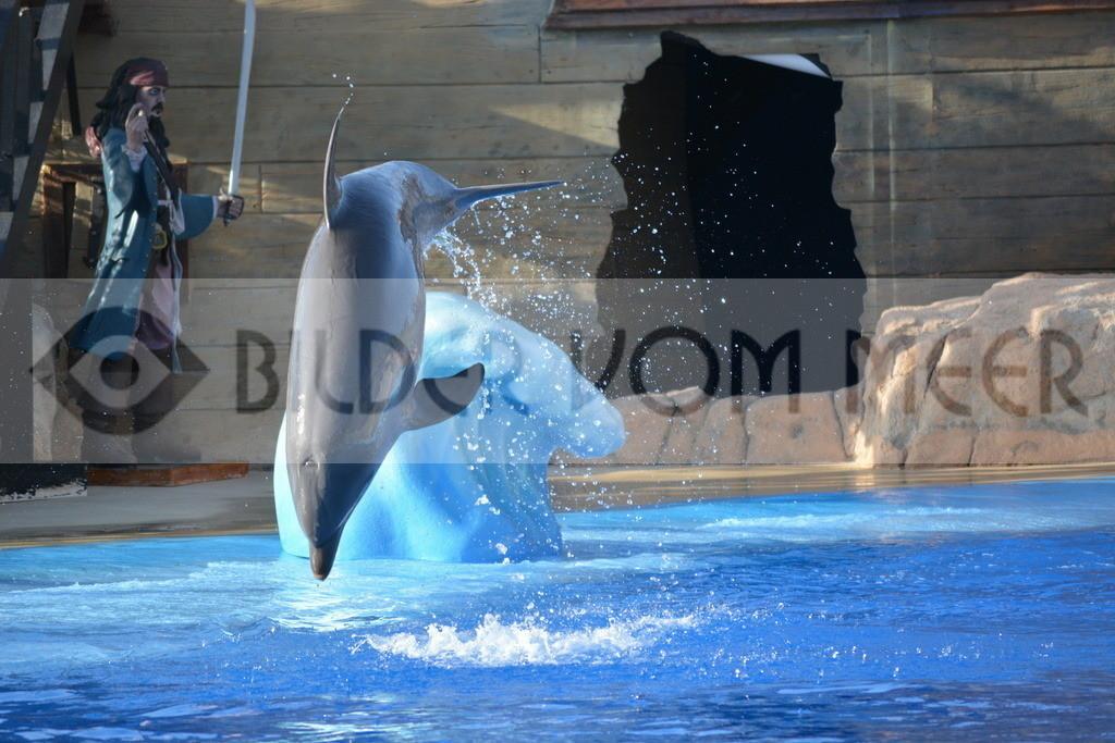 Delfin Bilder   Foto springender Delfin