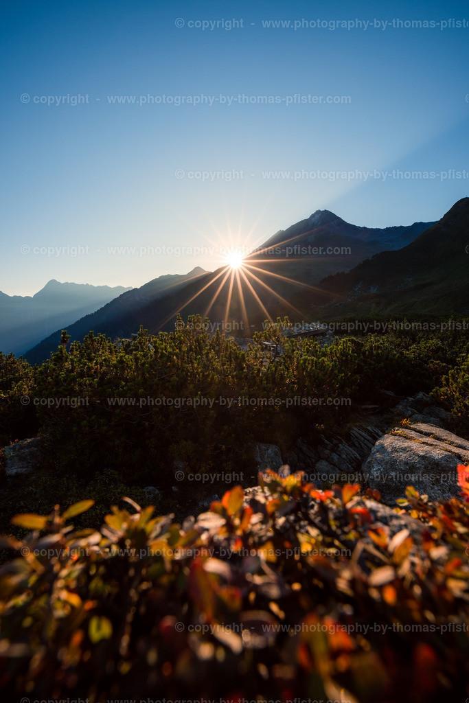 Ahorn Sonnenaufgang Spätsommer-11