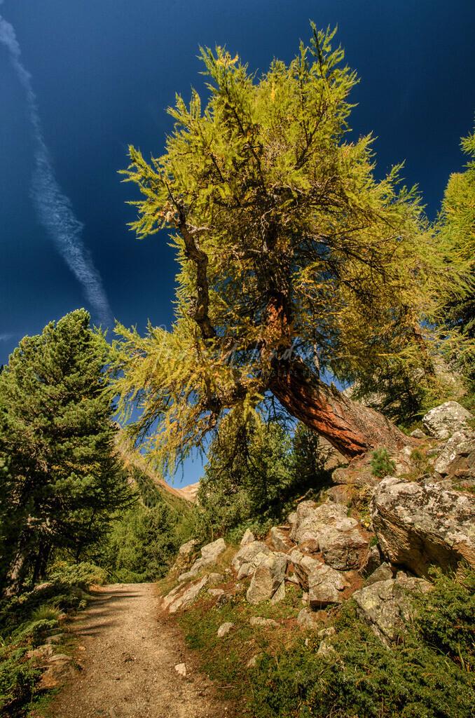 Wanderung im Lärchenwald