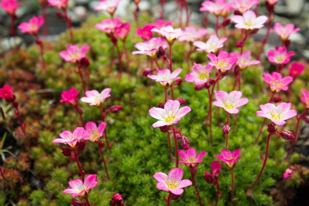 Blüten | Blumenmotiv